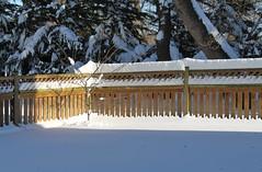 Band of Light - HFF! (karma (Karen)) Tags: trees light snow home backyard shadows fences maryland baltimore blizzard 4winter hff fencefridays