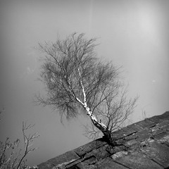 living in a hostile world (vfrgk) Tags: sky blackandwhite bw tree nature monochrome sunny minimal lookup urbannature inspire hostile outstanding proudness imagepoetry