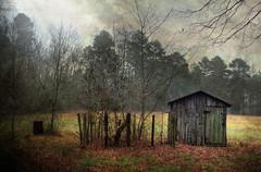 Empty Garden (Doug NC) Tags: texture garden hibernation paree emptygarden dougalug pareeerica darkrays
