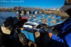 Fishermen - Essaouira, Morocco (ValeCrio) Tags: travel sea canon fisherman mare fishermen morocco marocco sharks viaggio essaouira reportage squalo pescatori squali valeriocolantoni