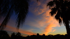 February 8th Sunrise (Jim Mullhaupt) Tags: pictures camera morning pink blue red wallpaper sky orange sun color tree weather silhouette yellow clouds sunrise landscape photography dawn photo nikon florida snapshot picture palm exotic p900 tropical coolpix bradenton sunup nikoncoolpixp900 coolpixp900 nikonp900 jimmullhaupt