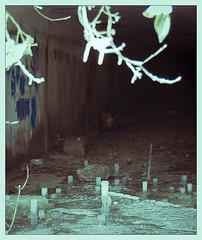 Cave (ezhikoff) Tags: winter snow tree stalagmites