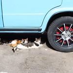"Catnap <a style=""margin-left:10px; font-size:0.8em;"" href=""http://www.flickr.com/photos/14315427@N00/25075710456/"" target=""_blank"">@flickr</a>"