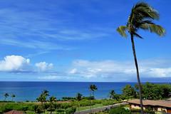 DSC33_4208 (heartinhawaii) Tags: ocean blue sea mer seascape palms landscape hawaii mar maui pacificocean kai palmtree makena 808 viewfromlanai southmaui nikond3300 makenabeachandgolfresort mauiinnovember room450