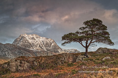 Mountain Pine (Shuggie!!) Tags: trees snow mountains pine clouds skyscape landscape scotland highlands rocks williams heather cliffs hills karl grasses bracken hdr torridon afternoonlight westerross gorse zenfolio karlwilliams