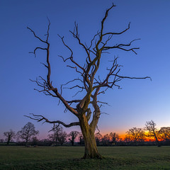 Twisted Glow (JamesPyle) Tags: light sunset dead long exposure glow olympus westonbirt elm starlight em1