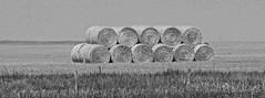 Fields10w (jb5860) Tags: artisticphotos bestartistic jb5860
