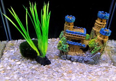 Aquarium Castle And Plastic Plant. (dccradio) Tags: blue decorations brown green castle aquarium nc rocks tank northcarolina fishtank ornaments picaday pictureoftheday dailyphoto gravel photooftheday picoftheday lumberton plasticplant mossball aquariumgravel robesoncounty