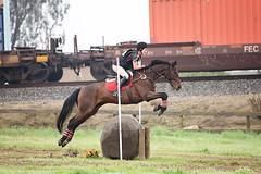 Cross Country Horse Jumping (lisavphotog) Tags: horse crosscountry hunter jumperhorse fresnohorsepark