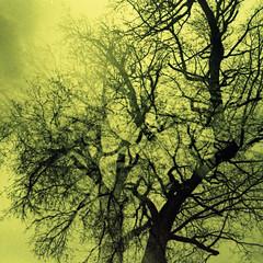 multi-tree (pho-Tony) Tags: milan 35mm iso200 lca xpro gates doubleexposure crossprocess shift slide cast kit analogue expired six hue e6 godard sgf c41 tetenal tetenalc41kit splitzer sixgatesfilms sgfgodard