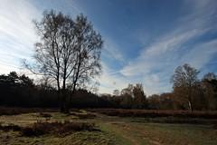 Sunny April morning (M a u r i c e) Tags: trees sky nature netherlands landscape heather wideangle loosdrecht efs1022mm