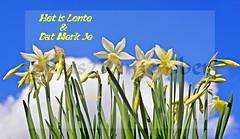 Spring is in the Air.... (Gardenshot) (ShotsOfMarion) Tags: flowers sky spring nikon flickr blauw lucht lente bloemen narcis kleurrijk bloem narcissen voorjaar gardenshot springisintheair tuinfoto shotsofmarion shots2remember