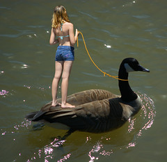 Goose Ferry (swong95765) Tags: bird water girl animal ferry swim river kid crossing rope goose waterfowl reigns aquaticbird