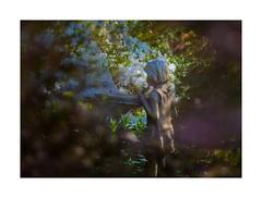Child By Birdbath - Spring Morning (sorrellbruce) Tags: morning nature statue gardens morninglight spring fuji child azaleas japanesemaple littlegirl framing chiaroscuro lightandshadow lr6 photoninja colorefexpro framefun fujinon90mm fujixt1 petebridgwoodsharpeningpresets