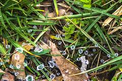 Spiderweb and Waterdrops alternative (adamopal) Tags: macro nature canon outside spiderweb 100mm dew waterdrops alternative macro100mm canon7d canon7dmkii canon7dmarkii
