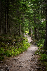 Avalanche Trail in Glacier National Park, MT - 20150804CRN (Christopher Neel Photography) Tags: park art nature creek forest photography montana outdoor hiking fine christopher peaceful calm glacier adventure trail national serene neel avalanche