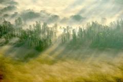 Airuno (Riboli Alessandro) Tags: light rio fog alberi landscape nikon alba fiume natura nikkor sole nebbia atmosfera luce ai paesaggio lecco magia 80200 mattino foschia d700 airuno
