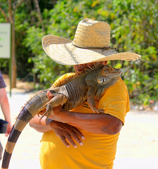 Cuddles (Brian 104) Tags: pet iguana handler attraction