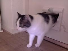 20160428-113904-i-1 (Catflap central) Tags: camera pet cats cat pi raspberry meow catdoor catflap kattenluik katzenklappe catflapj2nnl