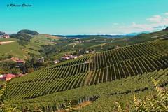 vigneti e ancora vigneti (sanino fabrizio) Tags: italia natura campagna piemonte paesaggio barolo langhe vigneti filari
