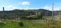 Chteau de Larnage  Hermitage Tournonais Tourisme (Hermitage Tournonais Tourisme) Tags: vignes vignoble chteau printemps patrimoine crozeshermitage larnage drmedescollines hermitagetournonaistourisme