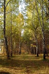 DSC_6005 (Rustam Bikbov) Tags: autumn september 2012    sverdlovskoblast