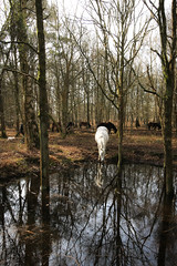 I could believe in unicorns! (Aquagg) Tags: canon eos is stm common bbowt f4556 70d snelsmore efs1018mm