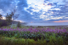 Dawn in the Swamp (tomkellyphoto) Tags: morning flowers sky usa color wisconsin clouds sunrise purple swamp marsh wildflowers hayward wi smithlake
