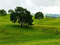 Plymouth Trees (cacheboyz) Tags: california county plymouth amador masking luminosity