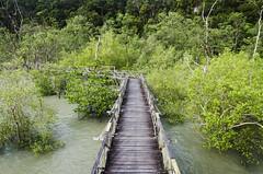 Way to the jungle (Javi Snchez Photography) Tags: park trip parque naturaleza nature ruta forest trekking photography selva best national jungle sarawak malaysia borneo fotografia nacional senderismo bako malasia