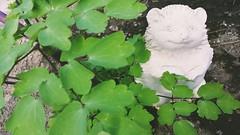 Hi Little Hedgehog (MDawny72) Tags: green leaves garden spring gardening dirt april hedgehog mygarden statuary secretgarden gardenart greenthumb springhassprung 2016 myphotography myhappyplace watchmygardengrow