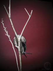 Da de lluvia en casa (Juanma Dominguez) Tags: sony conceptual minimalismo caracol qx10