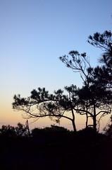 Layered Twilight (JamesPollock3) Tags: tree colors beauty sunrise daylight whisper florida touch dye elegance becoming saintgeorgeisland