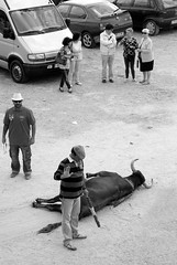 El despus (Julin del Nogal) Tags: animal dead death bull toro muerto cruel