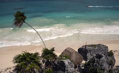 Playa De Tulum (Mal B) Tags: wall port de mexico ruins maya tulum playa mayan iguana trade roo costal sites yucatanpeninsula quintana obsidian qroo nikond600 juandaz 77780tulum precolumbianmayasitezama meaningcityofdawn zamameaningcityofdawn zamacityofdawn tulmyucatanmayanwordforfence wall1ortrench