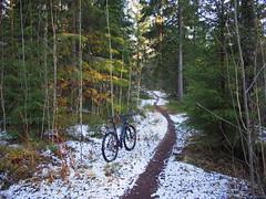 2016 Bike 180: Day 91,  April 23 (olmofin) Tags: park trees snow pine finland lumix path central mtb spruce f25 29er 14mm polku heslinki 2016bike180