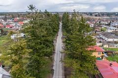 Ebatsuugade vahel (BlizzardFoto) Tags: trees alley aerialphotography puud between allee douglasfir viljandi aerofoto ebatsuuga vahel uustn