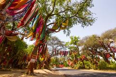 God, give me a Bride!!! (Santanu Sen) Tags: india colors worship faith culture belief saree sari gujarat
