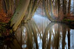 (intnvs@rocketmail.com) Tags: trees sun mist water fog sunrise river bomen mood forrest bos zon delden rivier sfeer zonsopkomst oelerbeek landgoedtwickel twickelervaart janteeuwen