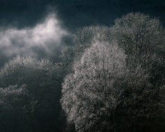 Shimmer (jellyfire) Tags: trees winter light sky cloud mist mountains wales dew snowdon slate snowdonia capel curig capelcurig landscapephotography leeacaster