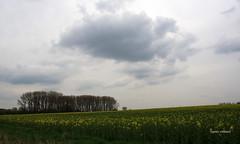 13-IMG_9908 (hemingwayfoto) Tags: energie landwirtschaft feld wolke gelb blte raps blhen bruchriede