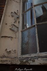 Broken glass and peeling paint. (lizzieisdizzy) Tags: wood reflection broken glass reflections peeling paint shards dilapidated deterioration