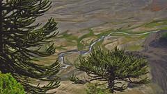 (diadelluvia) Tags: chile parque naturaleza lago agua natural reflejo sur araucaria region nacional novena conguillio melipeuco