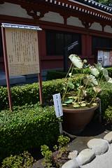 Tokyo (pineider) Tags: green japan nikon asia tits boobs titts topless nippon