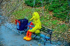 Spotted Big Bird at Central Park, New York City (mitzgami) Tags: nyc newyorkcity newyork bigbird nikon flickr centralpark manhattan elmo sesamestreet cookiemonster nikonphotography d7000
