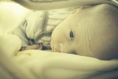 (nikoskorom) Tags: boy portrait baby nikon child indoor blanket newborn d750