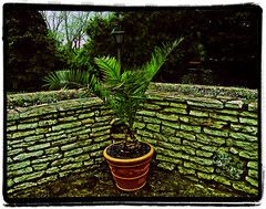 Balchik botanical garden, Bulgaria (cod_gabriel) Tags: wall greg bulgaria jardimbotnico botanicalgarden hortusbotanicus sloppy bulgarie jardnbotnico balchik  ortobotanico botanischergarten bulgarije bulgarien dobrudja bulgaristan bugarska balcic  balcsik zid  bugaria dobrogea gradinabotanica dobroudja   ogrdbotaniczny   cadrilater bulgria botanisktrdgrd botanikbahesi    dobruda dobruca dobruja  dobruda   balik balchikbotanicalgarden    dobrudzsa dobrugia dobroedzja dobrudzja   pixlromatic grdinbotanic   photogramio baczik baltsjik  kebunbotani bulgarianriviera baltik     rivierablgara