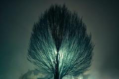 untitled . (helmet13) Tags: city longexposure winter mist tree fog backlight night flora raw nightshot branches linden lantern lime nocturne aoi 200faves peaceaward heartaward platinumheartaward world100f platinumheartshalloffame thebestcapturesaoi d800e