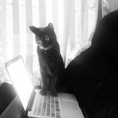 the main reason why I have a keyboard cover (jojoannabanana) Tags: cat blackcat laptop macbookpro instagramapp uploaded:by=instagram