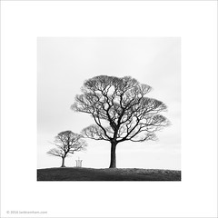 Love & Protection (Ian Bramham) Tags: trees love photo protection lymepark ianbramham